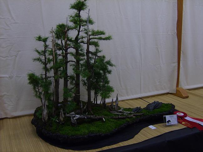 wacky waters bonsai